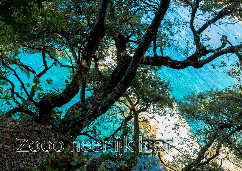 Ansichtkaarten - Ansichtkaart tropisch MM