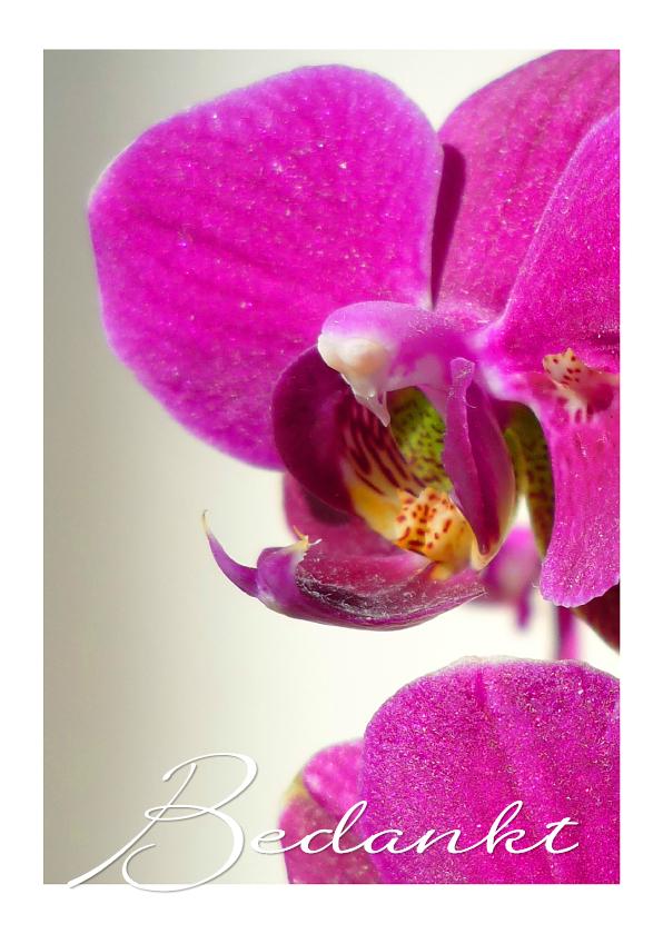 Bedankkaartjes - Bedankt Orchidee Paars