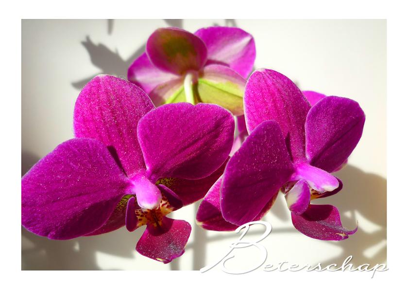 Beterschapskaarten - Beterschap Orchidee trio