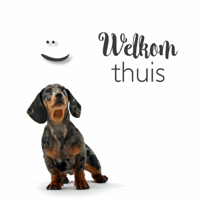 Beterschapskaarten - Beterschap Welkom thuiskaartje met een lief hondje