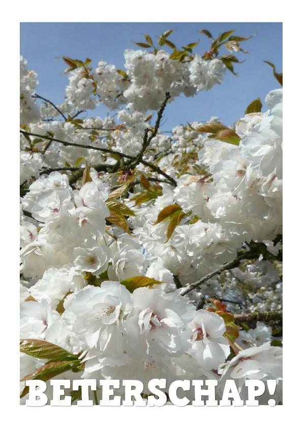 Beterschapskaarten - Beterschap Witte bloesem