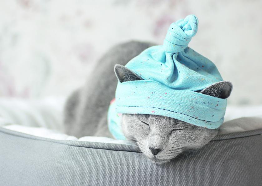 Beterschapskaarten - Beterschapskaart van een slapende kitten met een mutsje