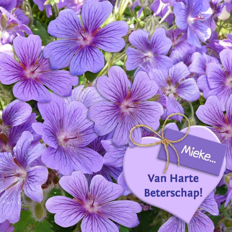 Beterschapskaarten - Mooie beterschapskaart bloemen, hart met kaartje purper