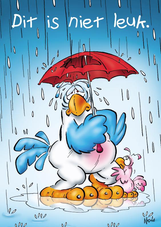 Beterschapskaarten - Rocco beterschap 3 papegaai paraplu