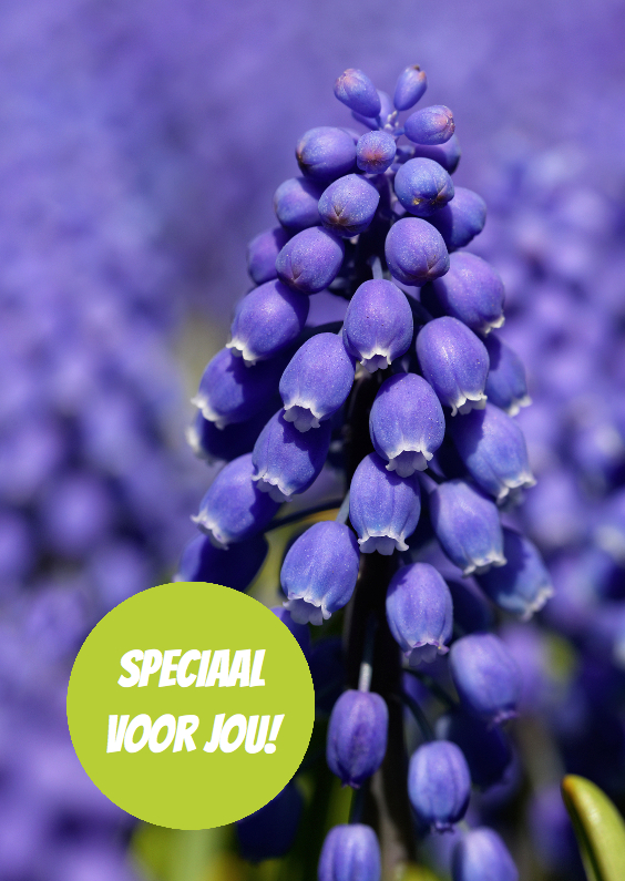 Bloemenkaarten - Blauwe druif groene cirkel - OT