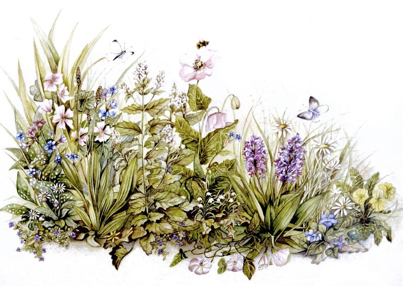Bloemenkaarten - bloemen en kruiden ansichtkaart