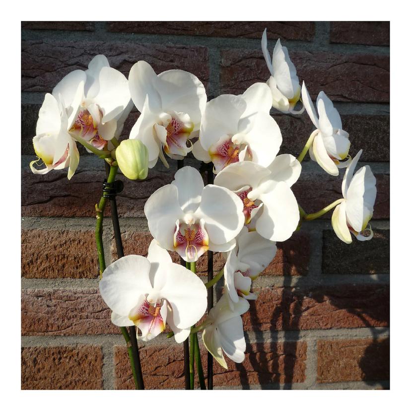Bloemenkaarten - bloemen orchideetjes muurbloem