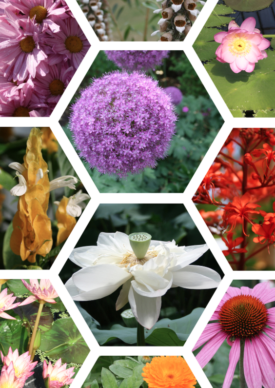 Bloemenkaarten - Bloemen raster