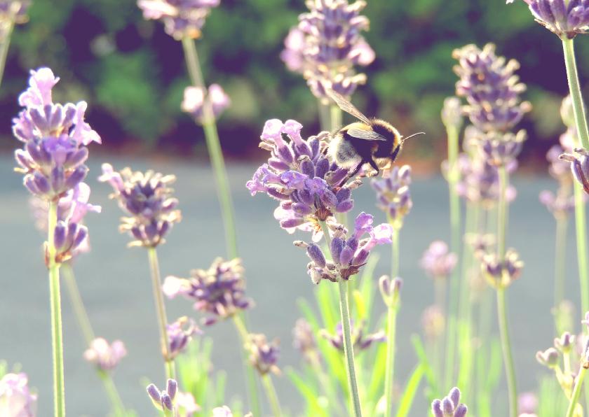 Bloemenkaarten - Bloemenkaart lavendel met bijtje