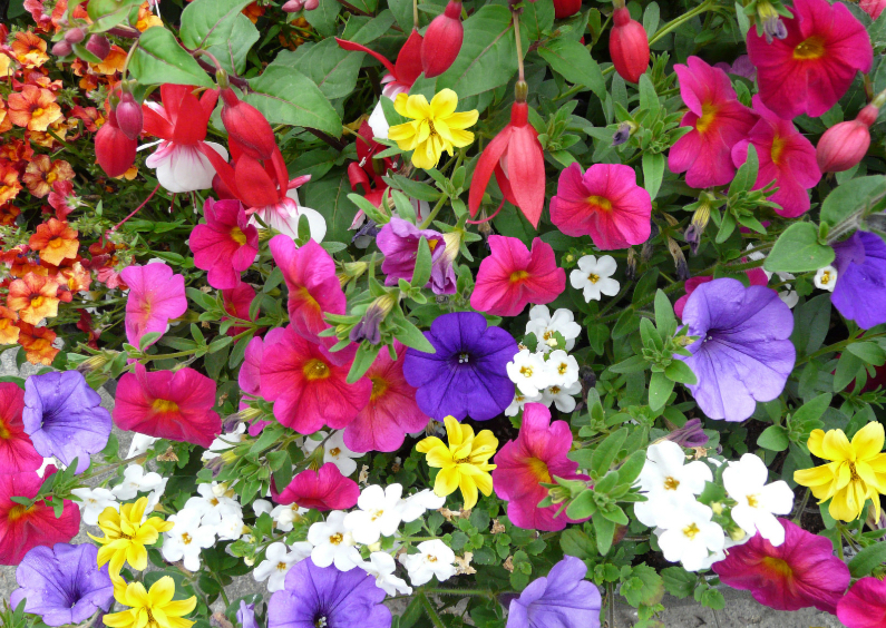 Bloemenkaarten - Bloemenkaart met diverse mooie bloemen in border