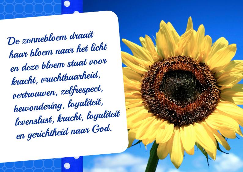 Bloemenkaarten - Bloemenkaart Zonnebloem - BK