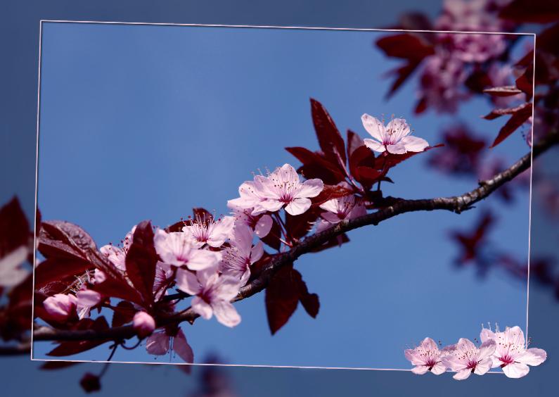 Bloemenkaarten - bloesemtak