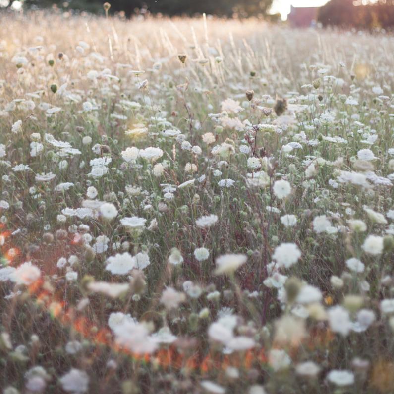 Bloemenkaarten - Franse veldbloemen