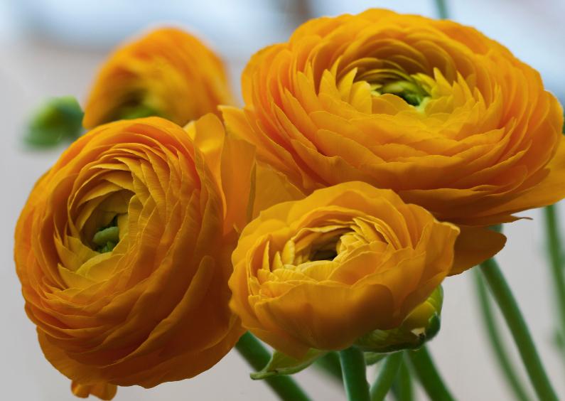 Bloemenkaarten - gele voorjaarsbloemen