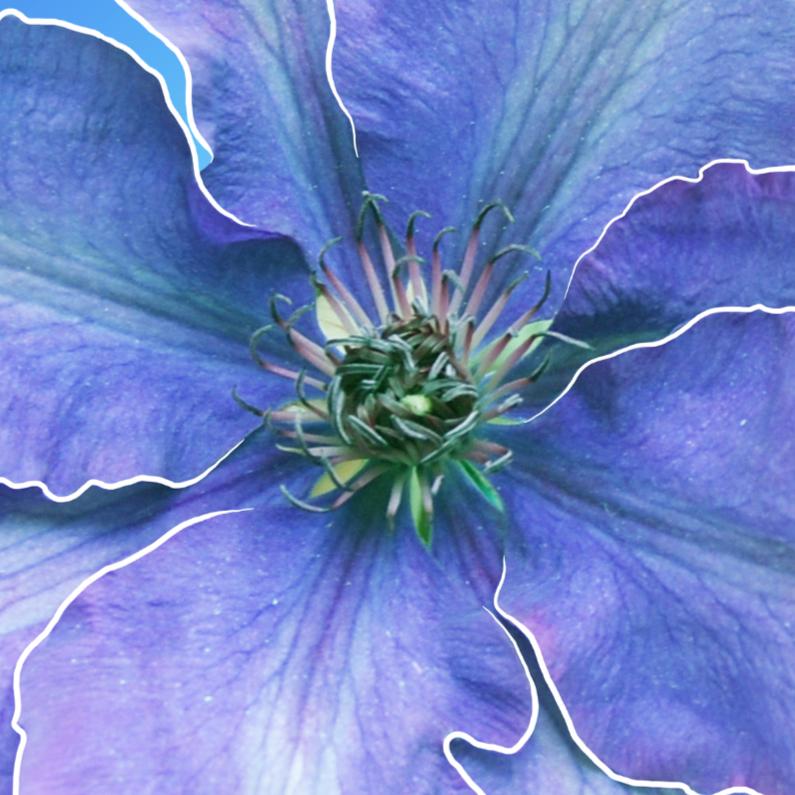 Bloemenkaarten - Grote afbeelding bloem paars