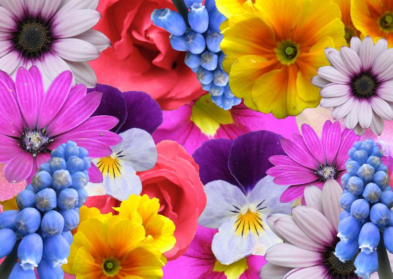 Bloemenkaarten - Kleurige bloemencollage