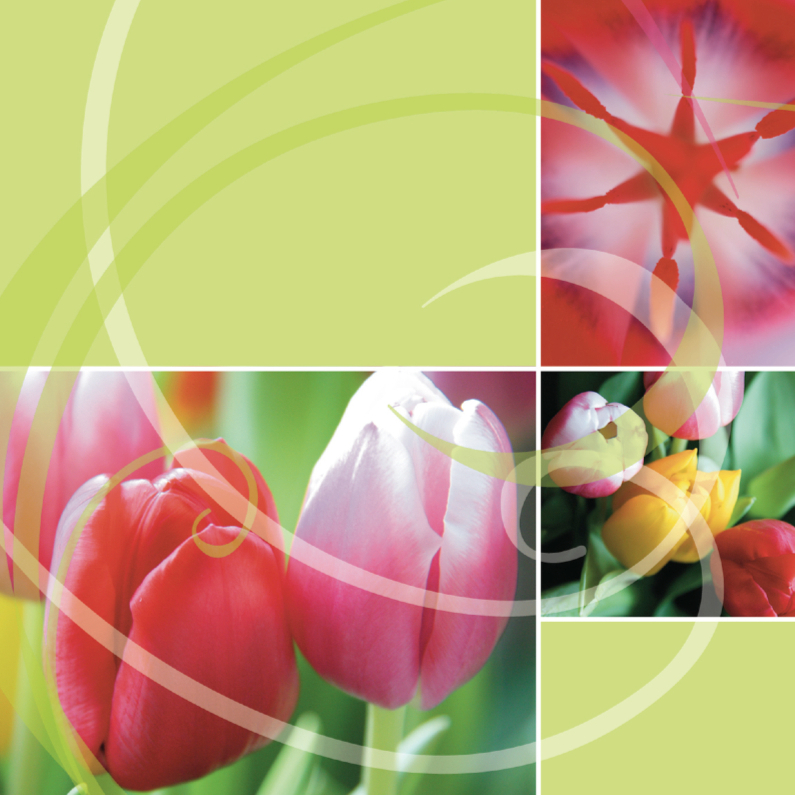 Bloemenkaarten - Kleurrijke tulpenkaart met groen en roze