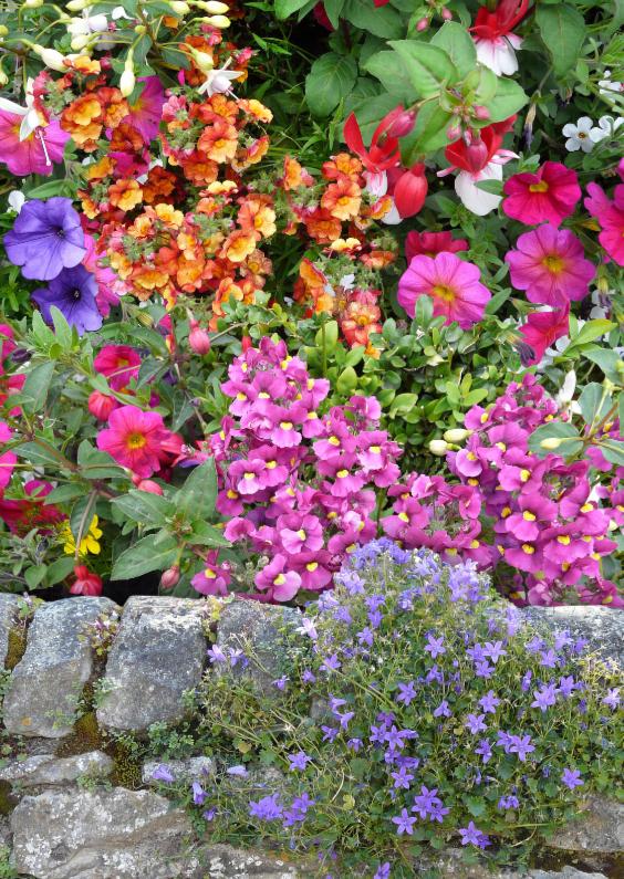 Bloemenkaarten - Mooie bloemenkaart bij Engels muurtje
