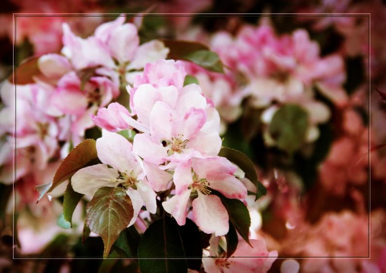 Bloemenkaarten - nostalgische roze bloesem