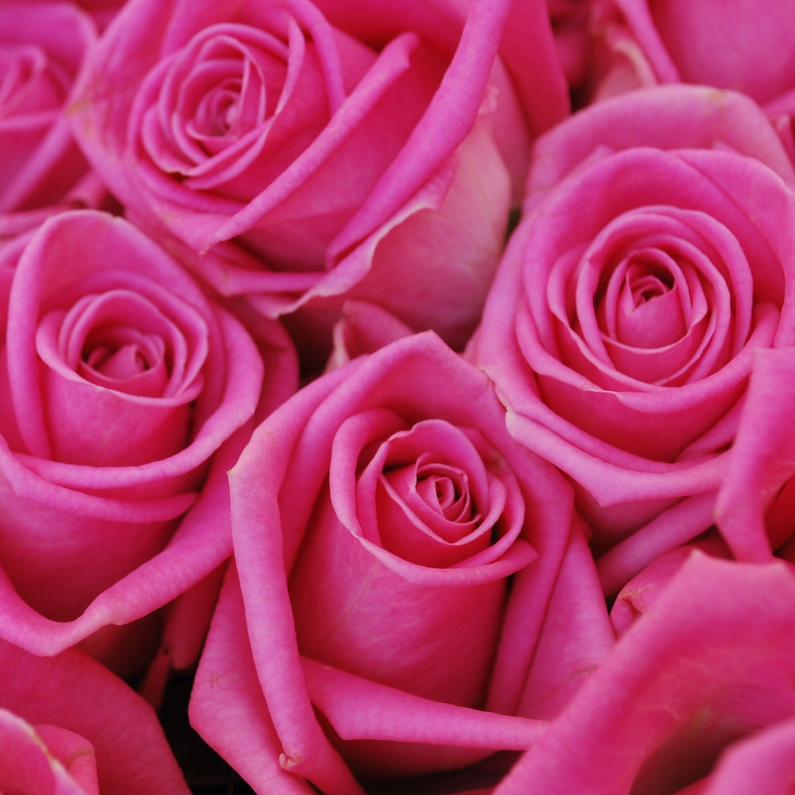 Bloemenkaarten - Roze rozen Anet Fotografie