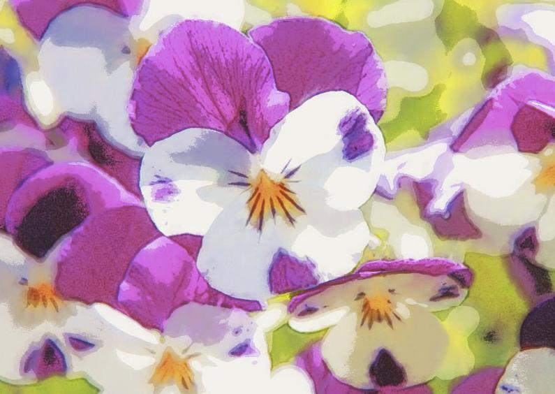 Bloemenkaarten - viooltjes op ansicht
