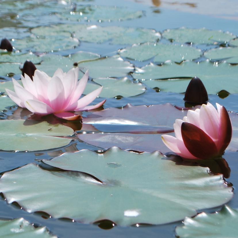 Bloemenkaarten - Waterlelie fotokaart