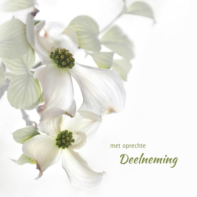 Condoleancekaarten - Condoleance met Cornusbloemen