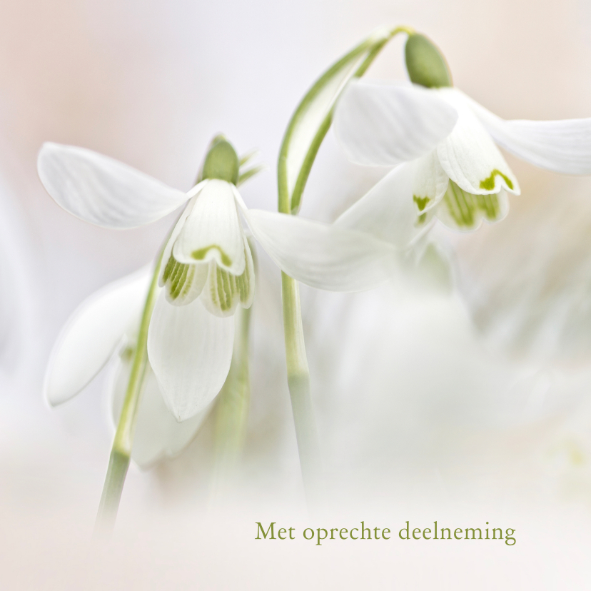 Condoleancekaarten - Condoleance sneeuwklokjes kleur