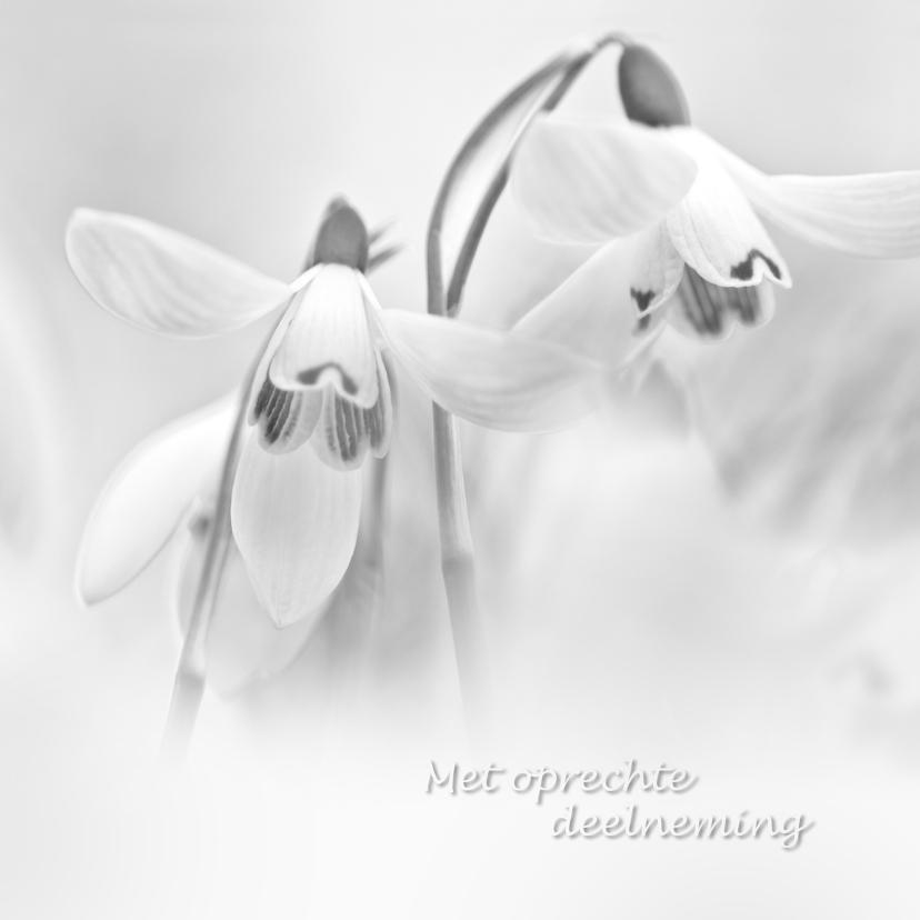 Condoleancekaarten - Condoleance sneeuwklokjes zw/wit