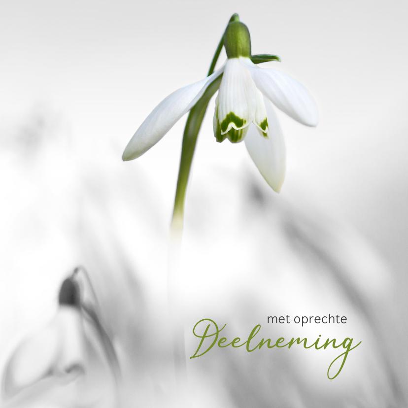 Condoleancekaarten - Condoleance sneeuwklokjes