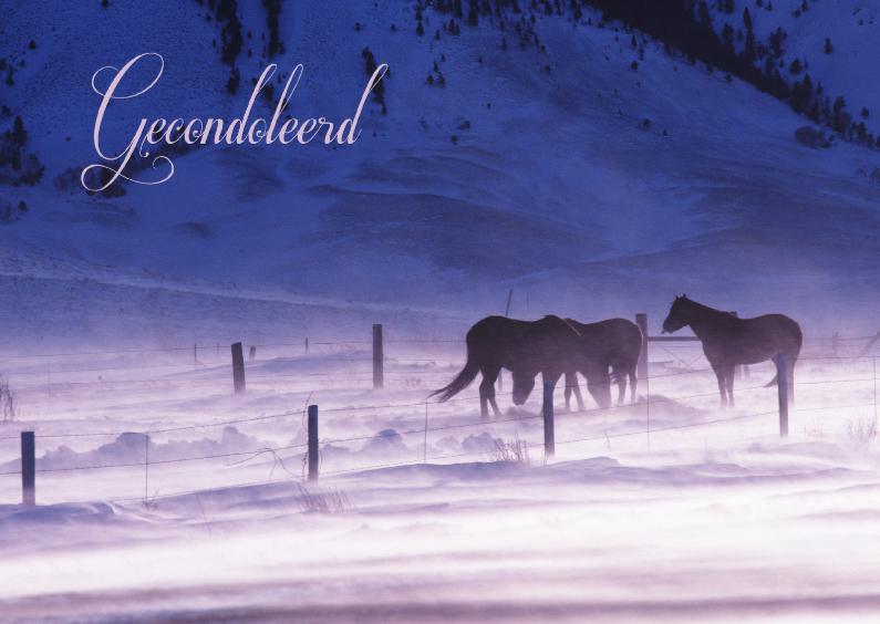 Condoleancekaarten - Condoleancekaart van paarden in de sneeuw