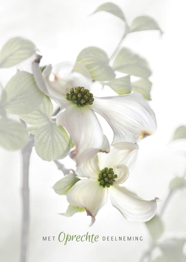 Condoleancekaarten - Condoleren met Cornus-bloemen