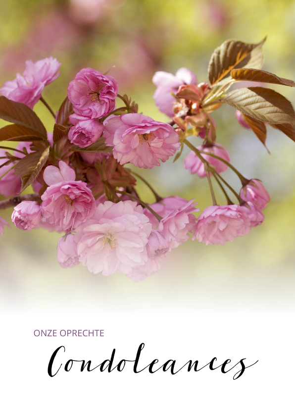 Condoleancekaarten - Oprechte Condoleances roze prunus