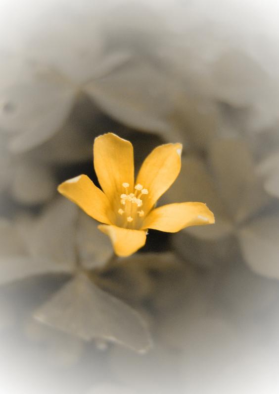 Condoleancekaarten - Oranje bloem rouwkaart