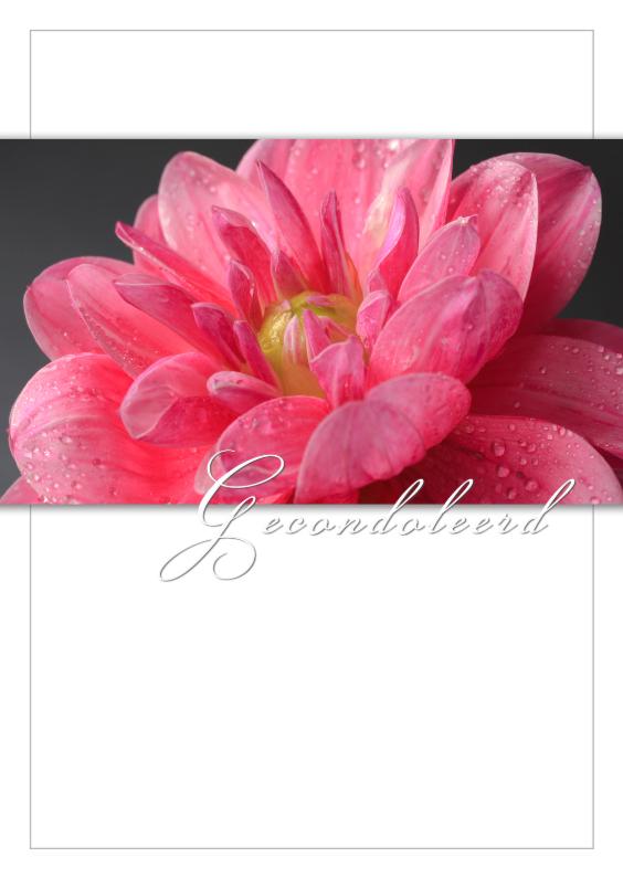 Condoleancekaarten - Roze dahlia in bloei