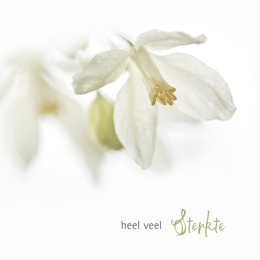 Condoleancekaarten - Sterkte met witte bloemen