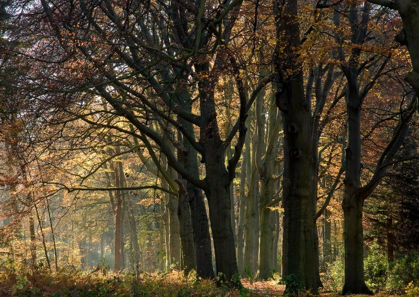 Condoleancekaarten - Verstild herfstbos in vriendelijk licht