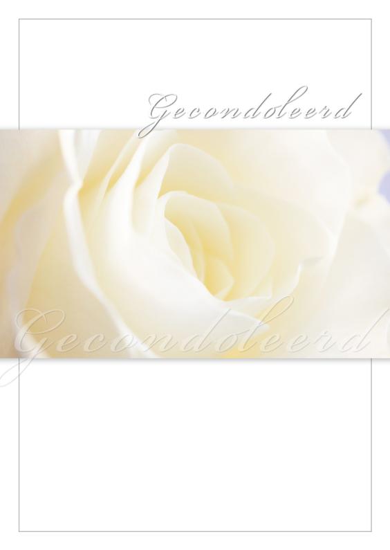 Condoleancekaarten - Witte roos in bloei
