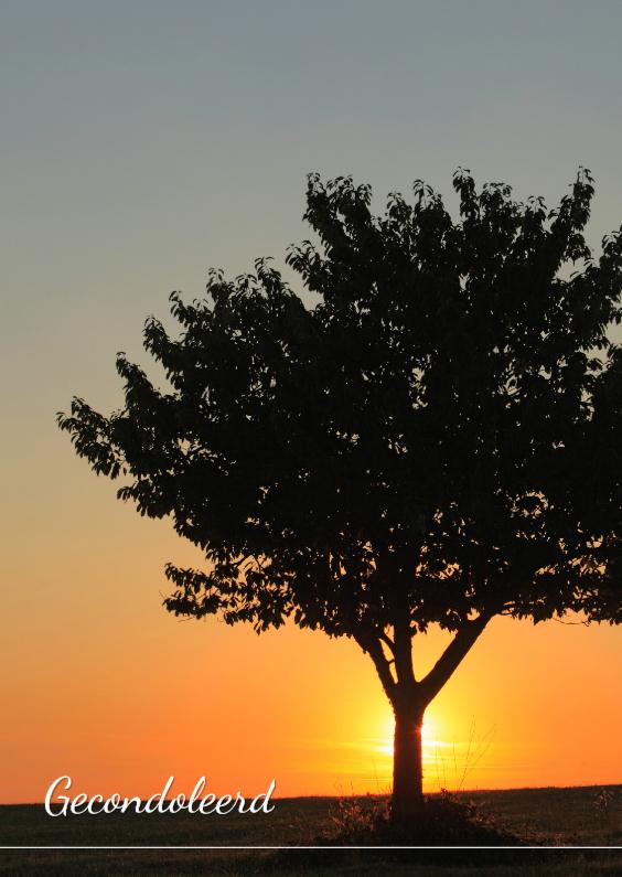 Condoleancekaarten - Zonsondergang achter een boom