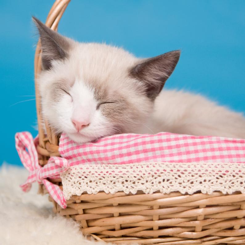 Dierenkaarten - Dieren - Kitten slapend mandje