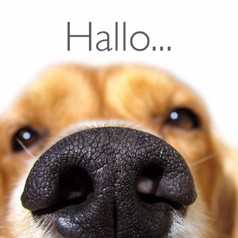 Dierenkaarten - Dierenkaart close up van hond
