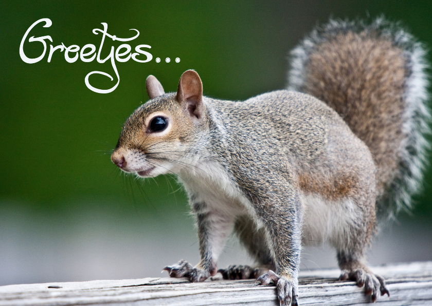 Dierenkaarten - Dierenkaart groetjes eekhoorn