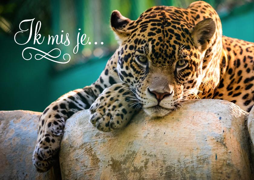 Dierenkaarten - Dierenkaart ik mis je luipaard