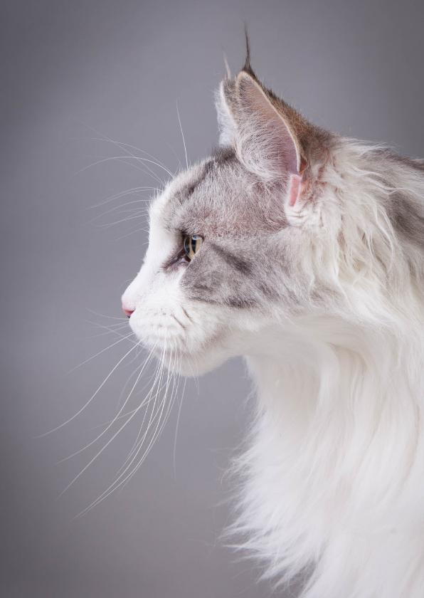 Dierenkaarten - Dierenkaart - Kat portret