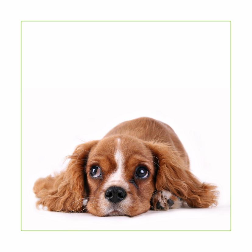 Dierenkaarten - Dierenkaart Lief hondje