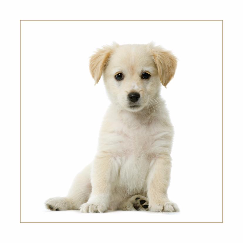 Dierenkaarten - Dierenkaart Lieve pup