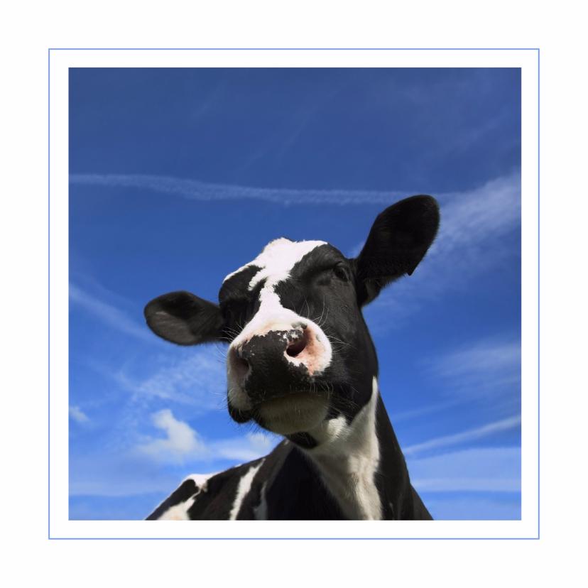 Dierenkaarten - Dierenkaart met grappige koe