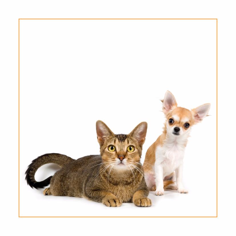 Dierenkaarten - Dierenkaart met kat en chihuahua