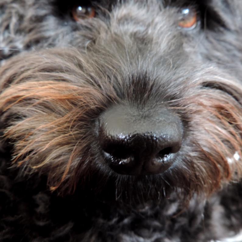 Dierenkaarten - Dierenkaart natte neus Hond