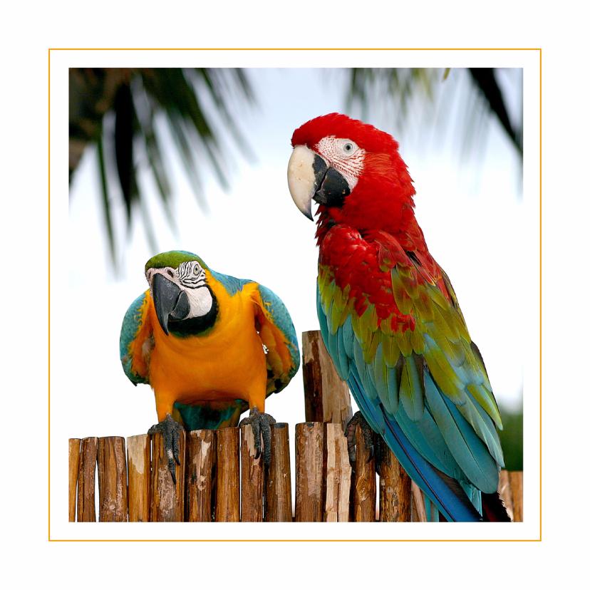 Dierenkaarten - Dierenkaart Papegaaien